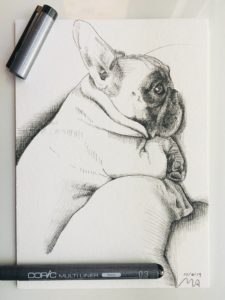 A photograph of an ink drawing of a French bulldog named Dozer by MacKendrew Arts.
